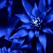 Hotel zur Blauen Blume